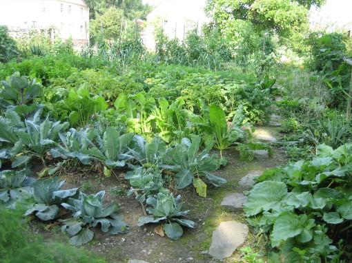 Vegetables at Strawberry Banke, NH