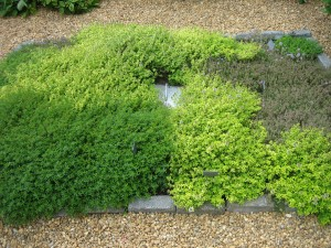 Center bed of thyme