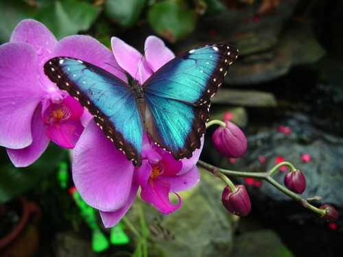ButterflyPictureMagicWings
