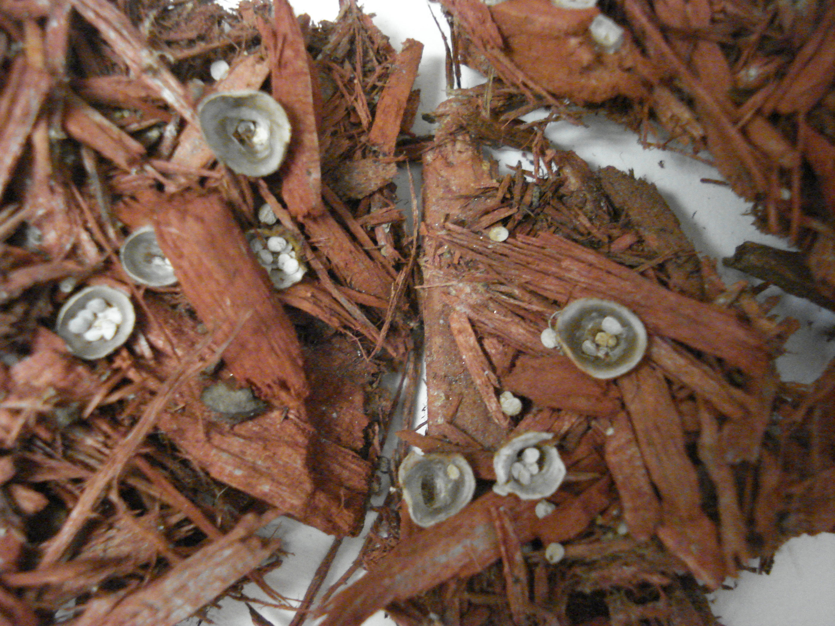 What S Growing In My Mulch Uconnladybug S Blog