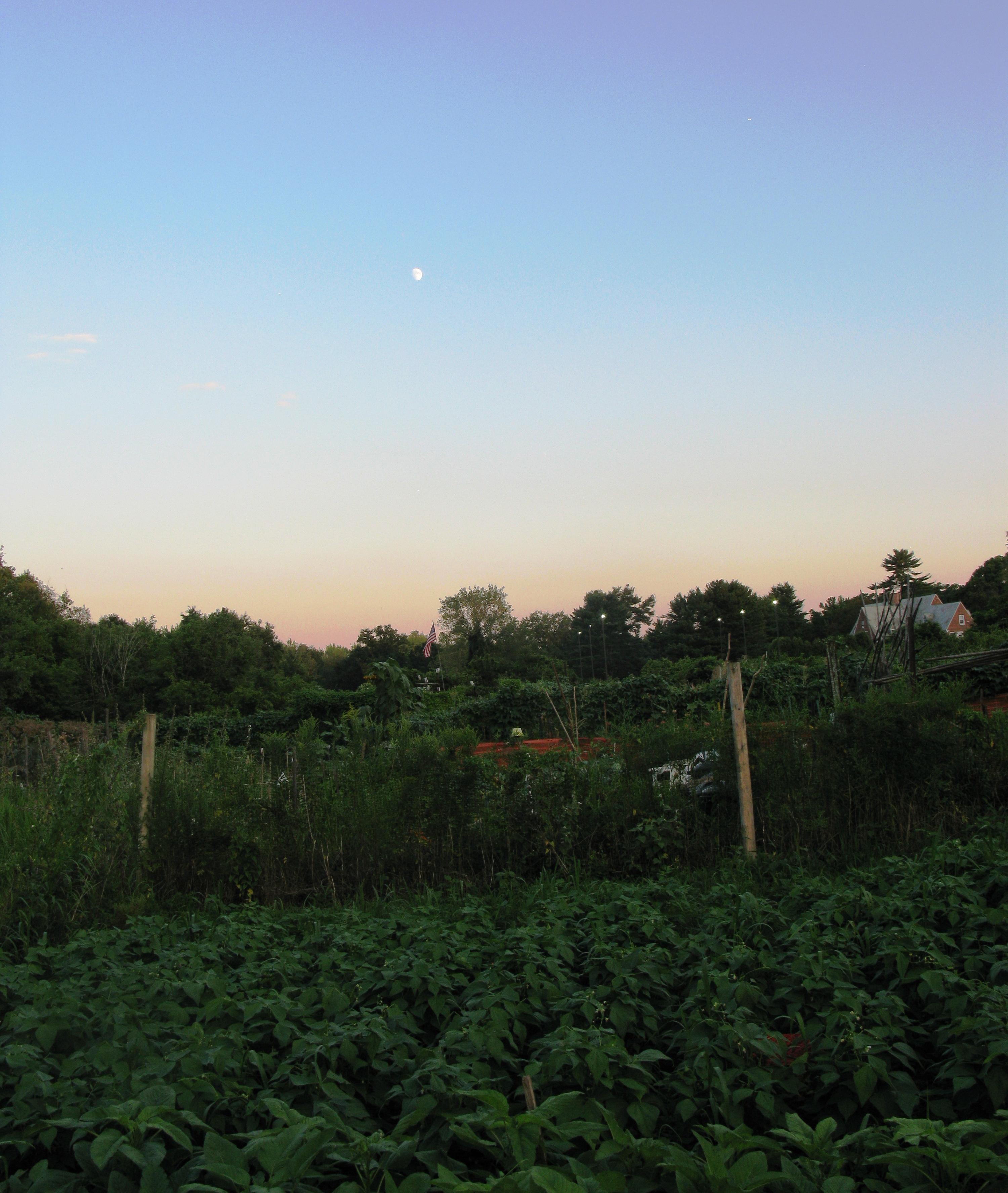 Hartford community garden tour uconnladybug 39 s blog for Under the garden moon