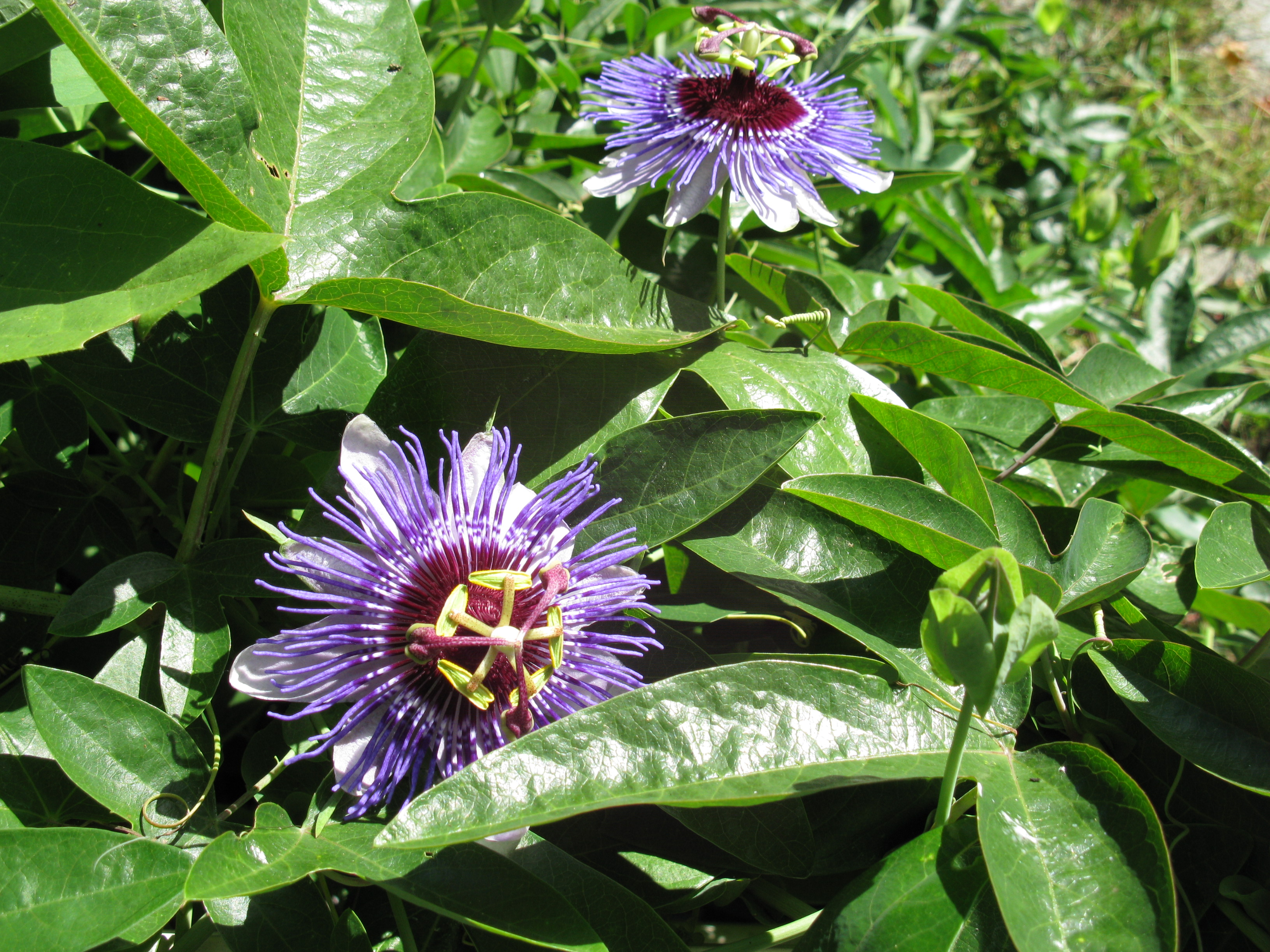 Half hardy plants insulate for winter protection uconnladybug 39 s blog - Hardy houseplants ...