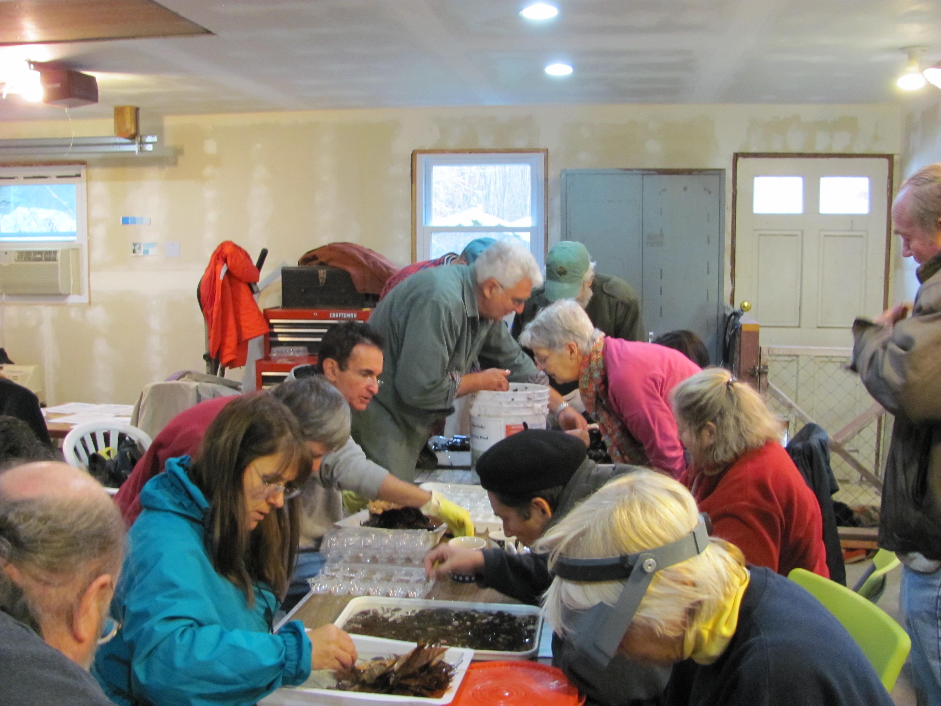Sorting specimens RBV class