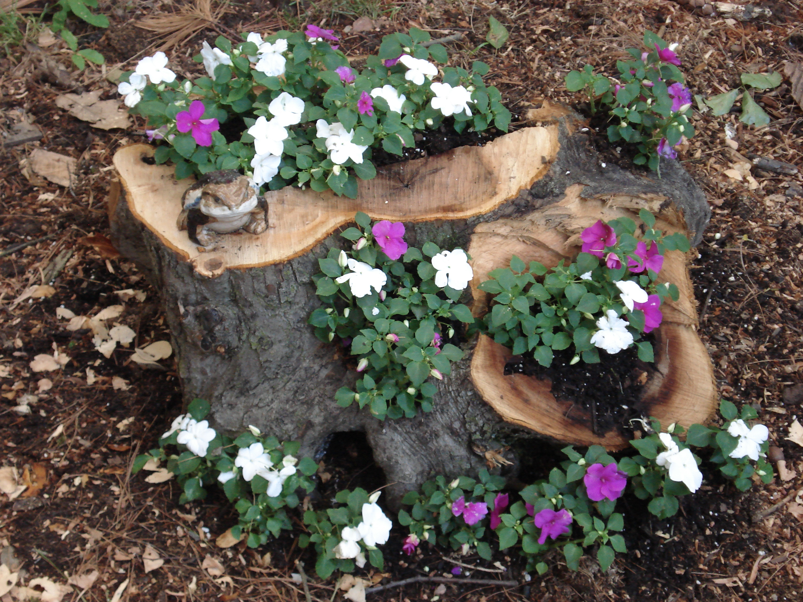Try a tree stump planter uconnladybug 39 s blog for Tree decorations for garden