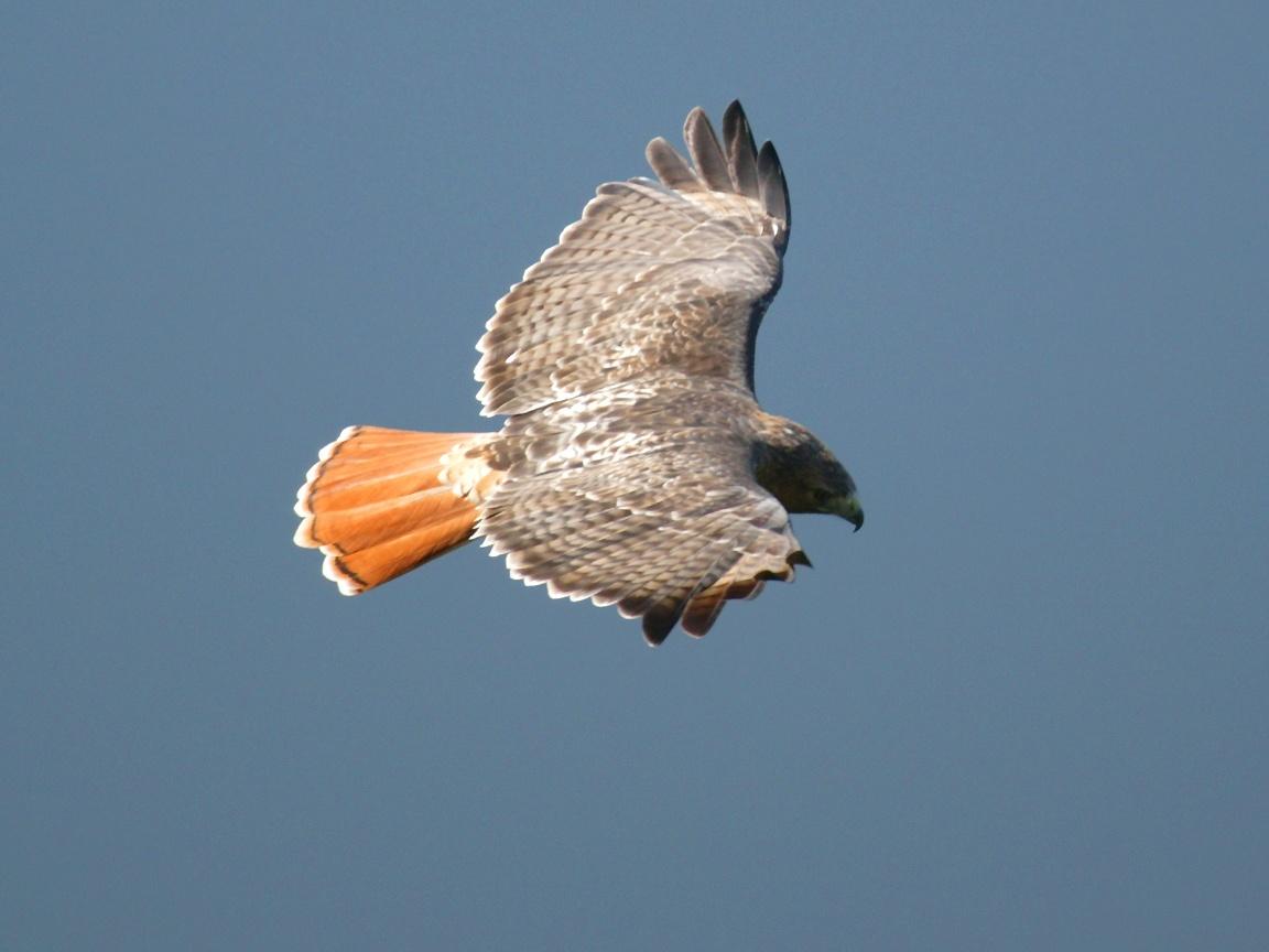Power Falcons Gif