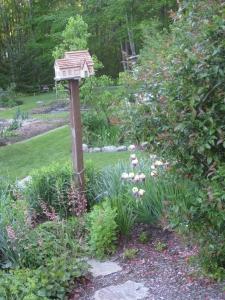 Birdhouse garden w old irises