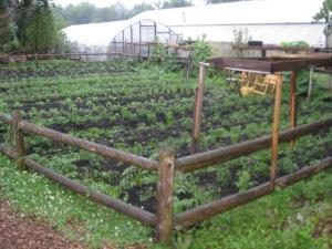 Community Garden at Knox Parks in Hartford