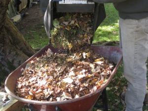 Pick up leaves along with grass clippings in fall to add to pile.