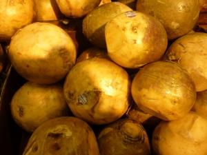Rutabaga, larger than white turnip. Photo by Carol Quish