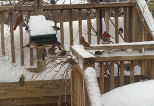 Hungry birds after a snow by S. Pelton