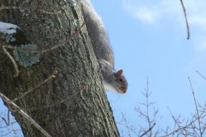 Mr Squirrel UConn 2-4-14 Pamm Cooper