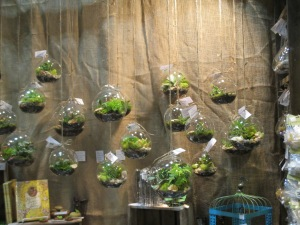 Hanging Terrariums by Naturesworks