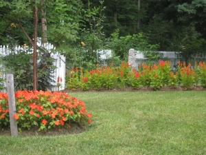 Front walkway with celosia one year & marigolds the next