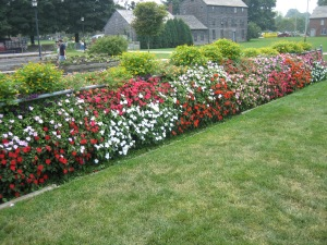 Impatiens wall at Prescott Park