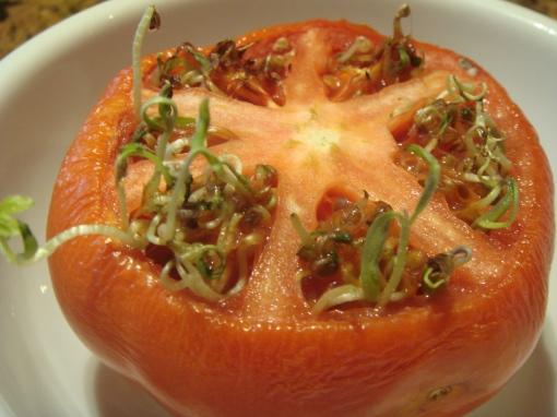 Same tomato a few days later.