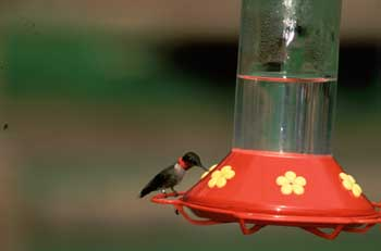 Hummingbird feeder, http://www2.ca.uky.edu photo