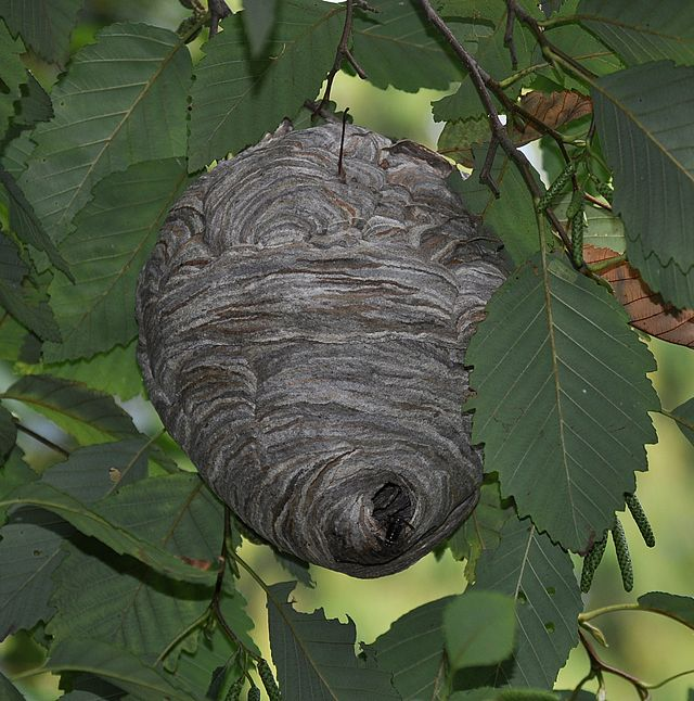how to stop hornets from building nests