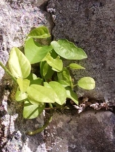 Plants growing in the limestone