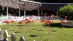 The marching flamingos!