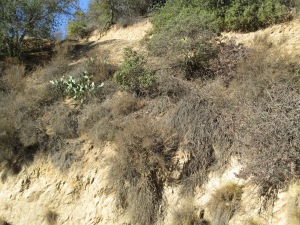 Granitic soils at Griffith Park