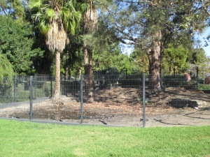 The tar pits are covered by a shallow layer of water that attracts animals even to this day.