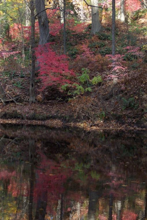 Autumn reflections, SAPelton photo