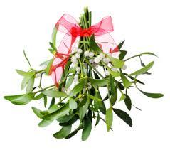 Mistletoe from flowers.org.uk