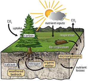 Nutrient cycle, from Oregon State University.