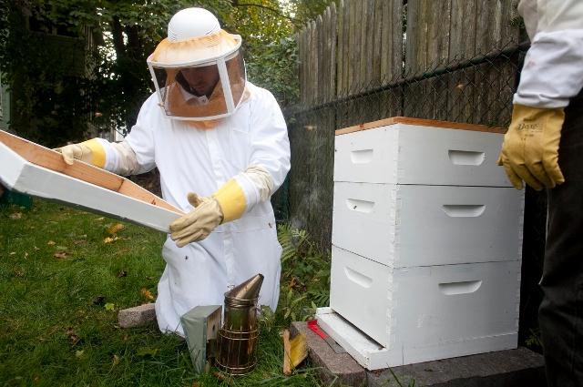 Bee keeper and hive, tufts.edu