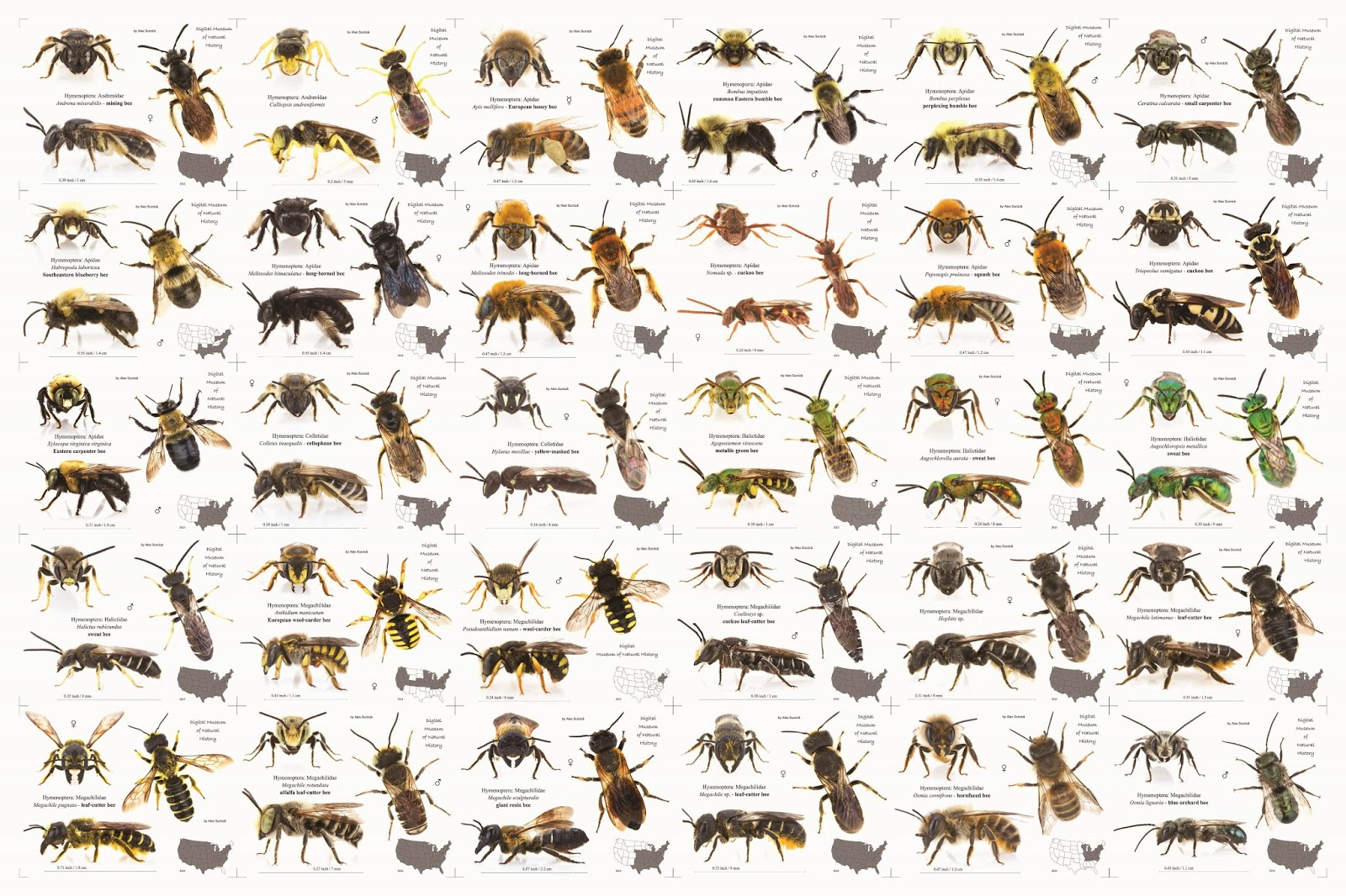 how to help bees canada