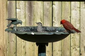 Busy birdbath