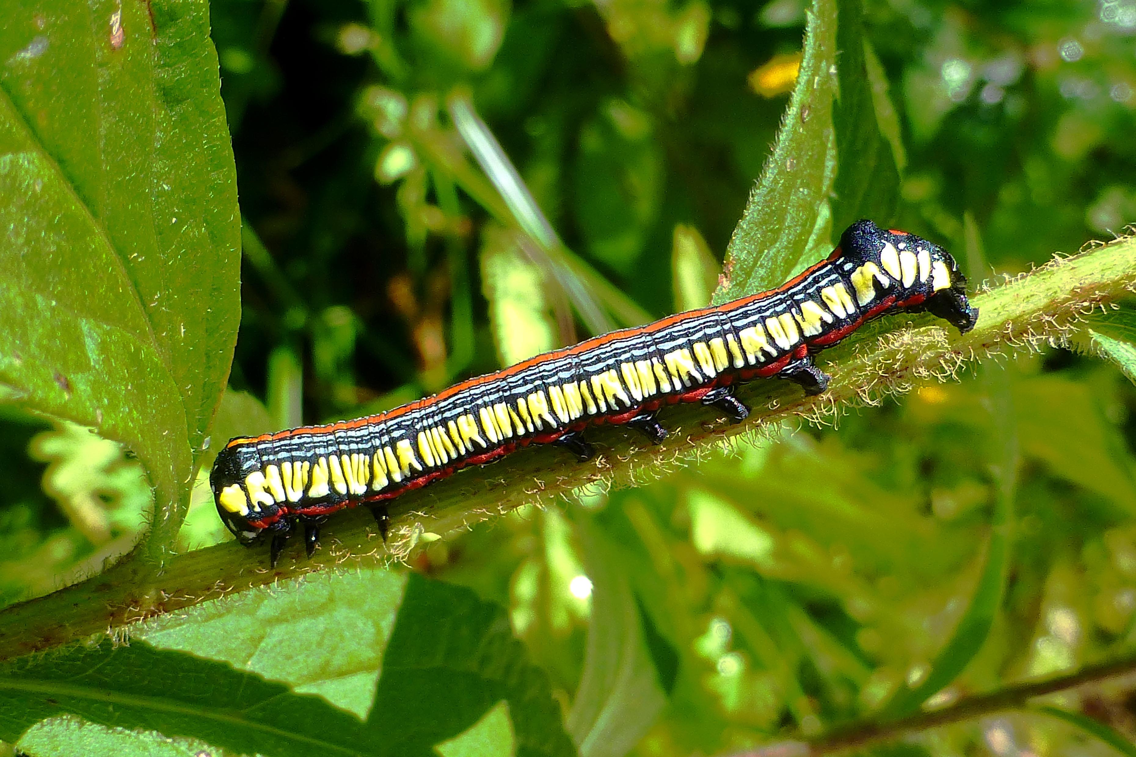 monarch butterfly uconnladybug u0027s blog