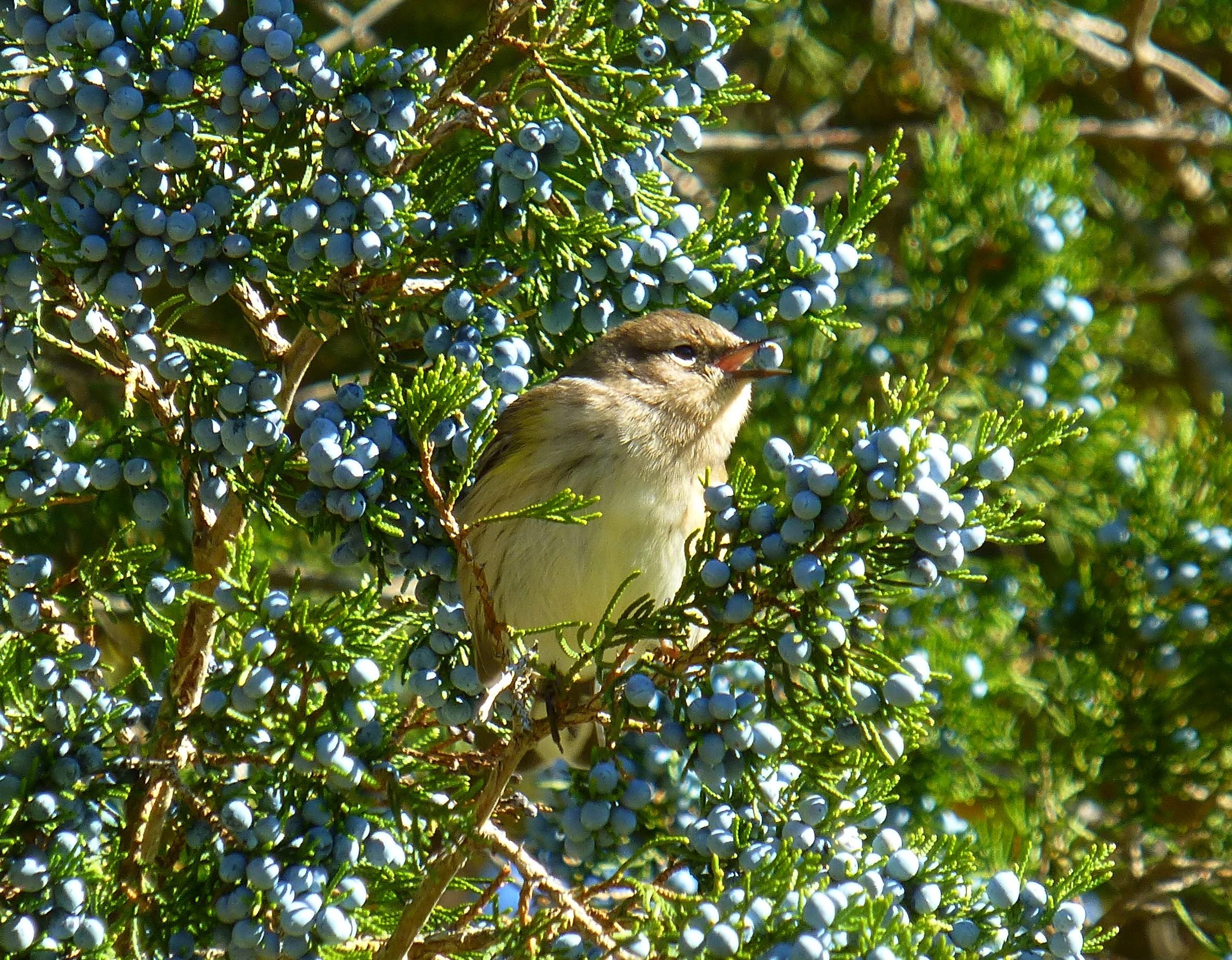 Autumn Leaves, Birds and Fruits | Uconnladybug\'s Blog