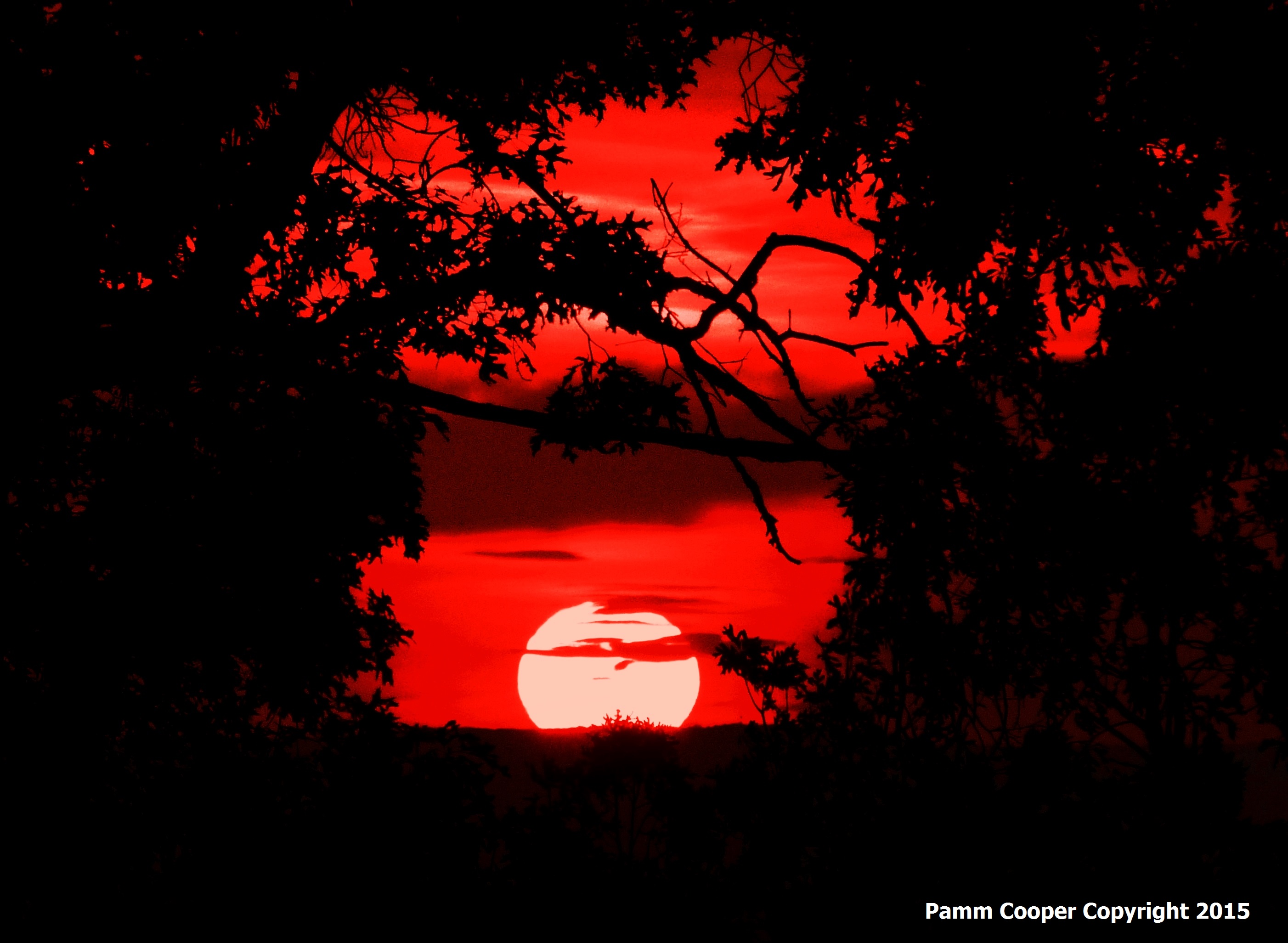 sunset Henry Park Vernon Autumn 2015 copyright Pamm Cooper