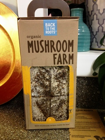 Mushroom Farm in a box, Day 1, photo C. Quish