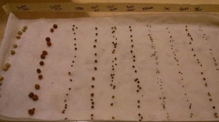 Pre-germination