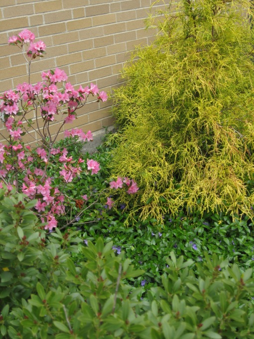 Azalea, vinca and cypress
