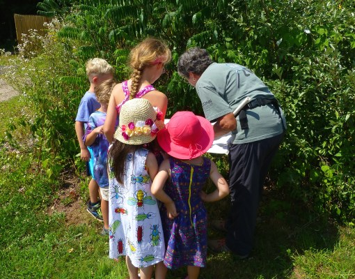 Bug Hunt with Jean Laughman