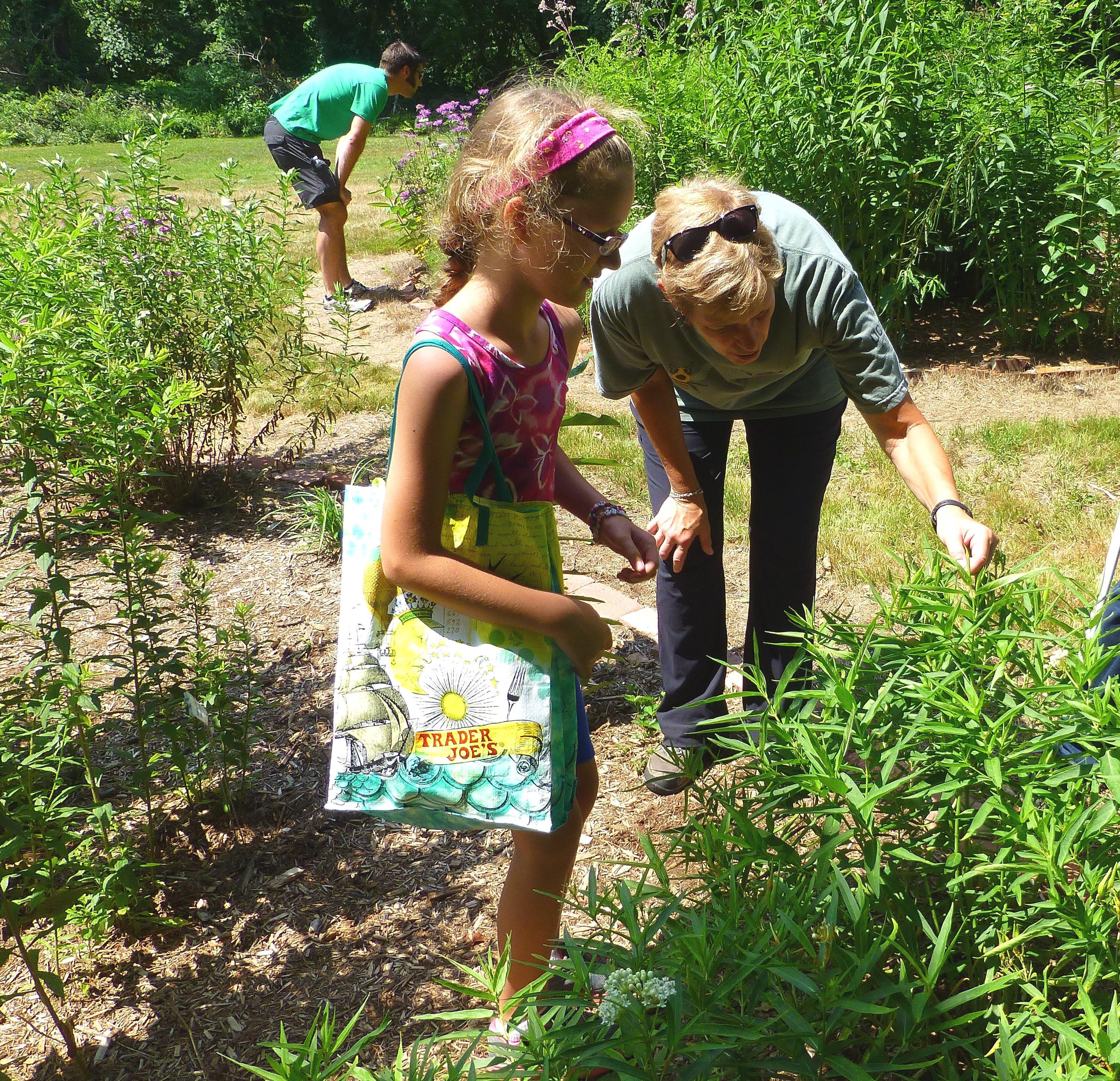 Butterfly garden walk with Tina Forsberg