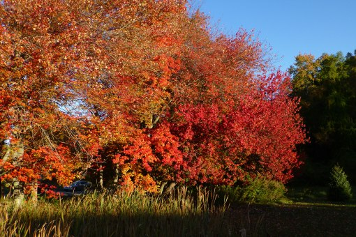 autumn-colors-in-early-morning-october-15-2015-storrs-pamm-cooper-photo