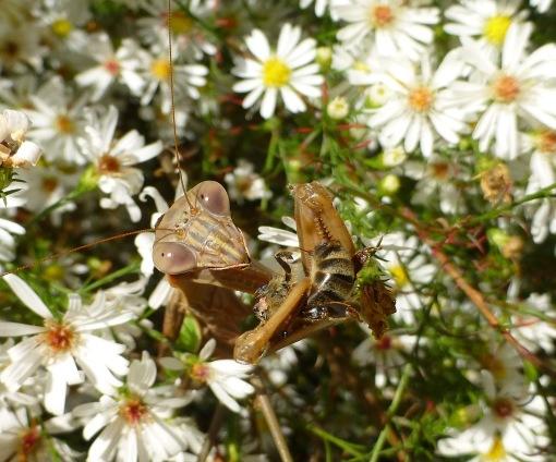blog-mantid-and-bee