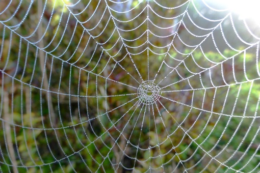 spider-web-and-dew-october-7-2016