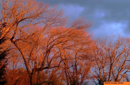 pre-sunset-winterr-glow