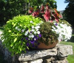 UConn flowers 032