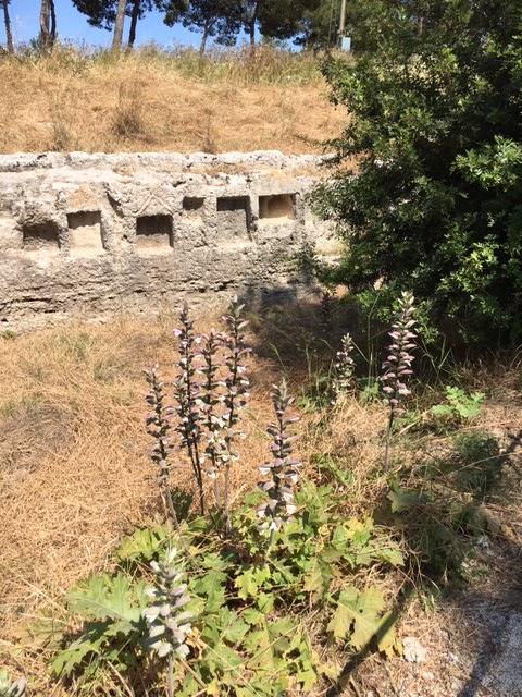 Syracusa Arch Park 14 Acanthus