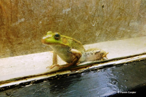 froggie in the window.jpg