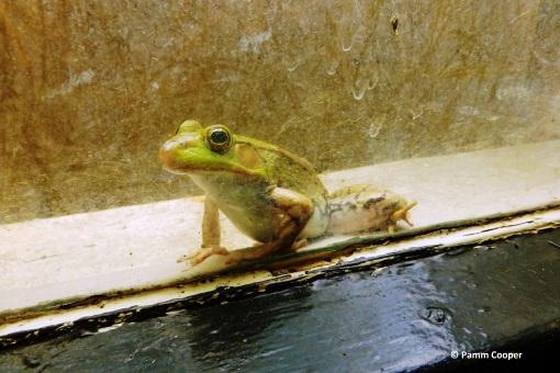 froggie in the window.jpg