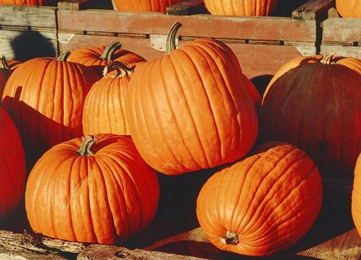 Pumpkinswikimedia