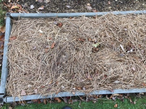 mulched bed