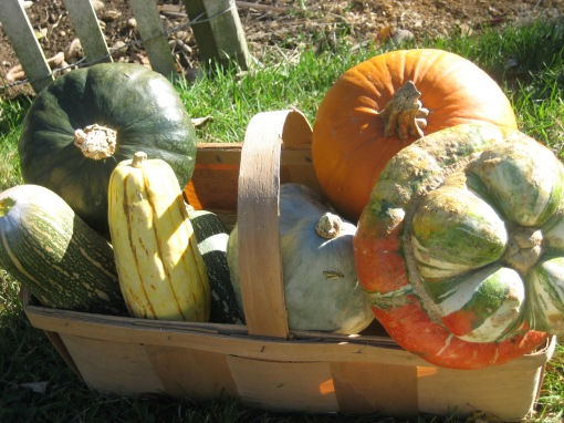 Winter squash in basket